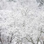 Prevent Data Loss During Power Outages Caused by Severe Winter Storms